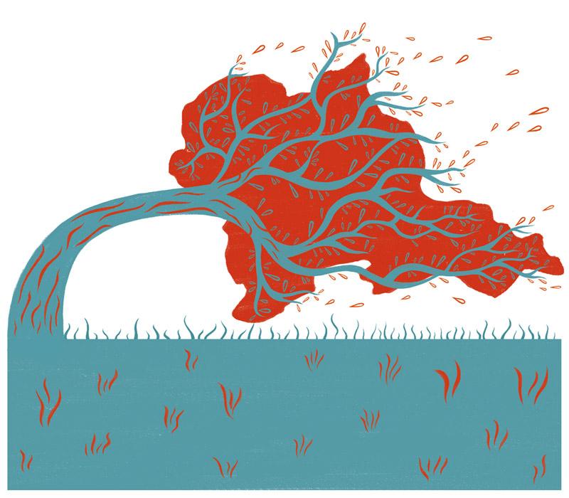 west-wind-Samantha-Farina-illustrator